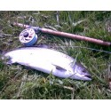 Salmon & Trout Anglers Gifts